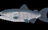 fish_sakana_sake[1].png