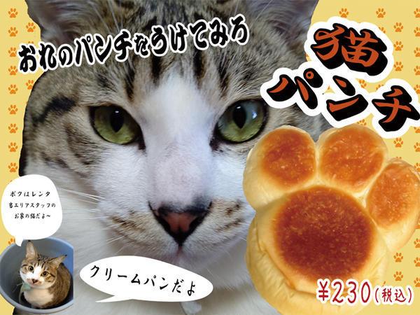 メールサイズ猫パンチ.jpg