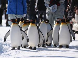 ペンギン_s.jpg