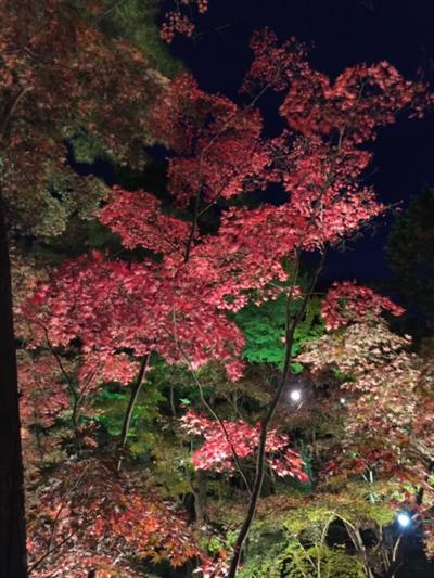 紅葉⑤.png