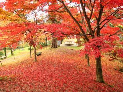 村松公園紅葉.jpg