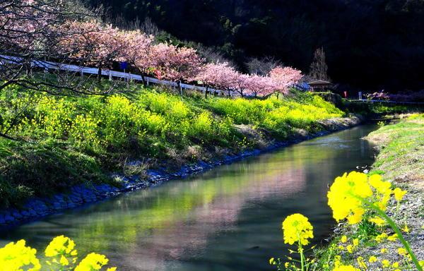 「水面に写る春」.JPG