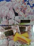 滝桜の奏で.JPG